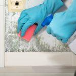 Mold Inspection NJ